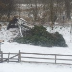 The kids favourite 'swing tree' which was felled in the first hours of the storm!